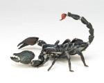 RevoGeo 001 – Emperor Scorpion