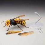 RevoGeo 003 – Japanese Giant Hornet
