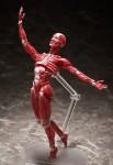 Max Factory Figma Human – Anatomical Model